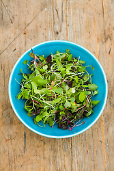 Turquoise bowl filled with microgreens (tiny baby salad leaves harvested when very young)