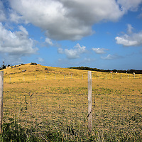 Barbwire Fence Around Cattle Pasture in Countryside of Antigua<br />