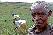 Rwanda.<br /> paysanne de 73 ans dans son champ. F&eacute;vrier 2004