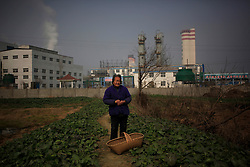 Chinese villager Dong Nianbao of Dongtan Village looks at her wasted farmland and fish pond in opposite the Jinhuarun Chemical Industry plant in a chemical industry park in Zekou Town, Qianjiang City of Hubei Province, China 15 January 2013. While the heavy smog in Beijing and much of northern China in recent days have caused alarm among residents and renewed scrutiny on the pollution woes of the country, villagers in a small town of Hubei Province have been grappling with severe air, water and noise pollution on a daily basis over the past two years. China's Xinhua news reported 04 January 2013 that more than 60 cancer deaths in various villages of Zekou Town has been caused by the heavy pollution from the chemical industry park nearby. About 20 or more chemical plants built around the villages of Dongtan, Xiangnan, Zhoutan, Sunguai, Qingnian and others over the past two years has created huge increases in noise, air and water pollution. Many villagers complained of intensifying respiratory, heart, skin and circulatory illnesses caused by the pollution and a large spike in cancer diagnoses and deaths since the factories were built. .
