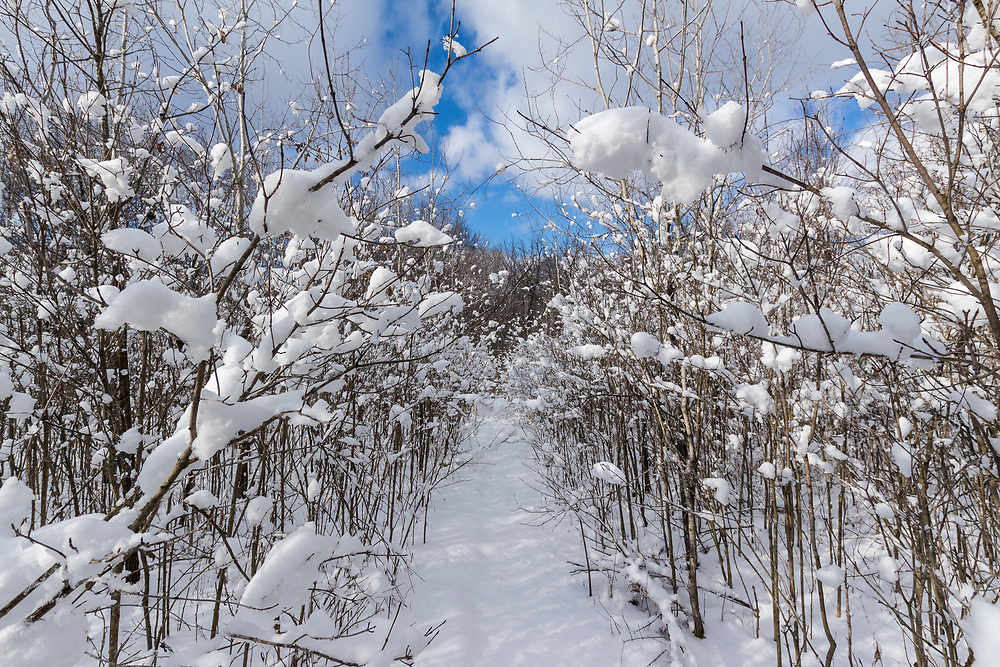 A narrow snow covered path in Morton Forest, Dane County, Wisconsin,