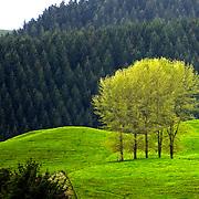 Landscape Rest
