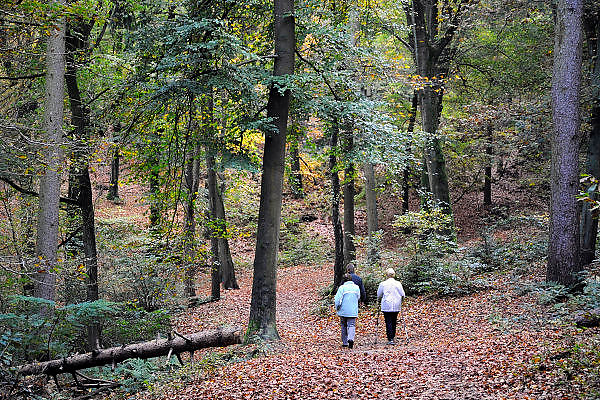 Nederland, Ubbergen, 22-10-2008Recreanten wandelen in het bos. een van hen loopt met nordic walking stokken.Foto: Flip Franssen/Hollandse Hoogte