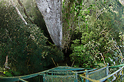 View over Rainforest Canopy from top of Ceibo Tree.<br /> Yasuni National Park, Amazon Rainforest<br /> ECUADOR. South America