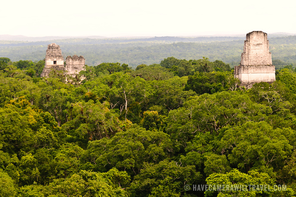 View of the Tikal Maya Ruins and the jungle canopy from the top of Temple IV, the tallest of several pyramids at the site. From left to right, one can see the tops of the Temple 1 (Temple of the great Jaguar), Temple 2 (Temple of the Masks), and Temple 3 (Temple of the Jaguar Priest). From this vantage point, one can watch and hear howler monkeys, spider monkeys, and many birds moving through the treetops.