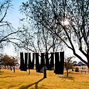 The Farm - sun through the trees