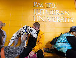 Therapy dogs visit before finals at PLU, Thursday, Dec. 8, 2016. (Photo: John Froschauer/PLU)