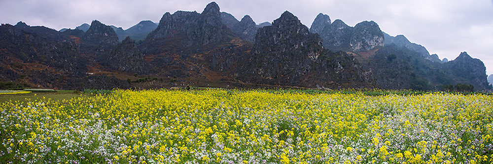Vietnam Images-panorama landscape-flower-Ha Giang