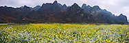 Vietnam Images-panorama landscape-flower-Ha Giang