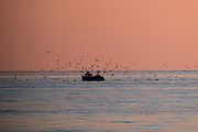 A British fishing boat surrounded by seagulls arriving back into Folkestone Harbour at sunset after inshore trawling in the English Channel. (photo by Andrew Aitchison / In pictures via Getty Images)