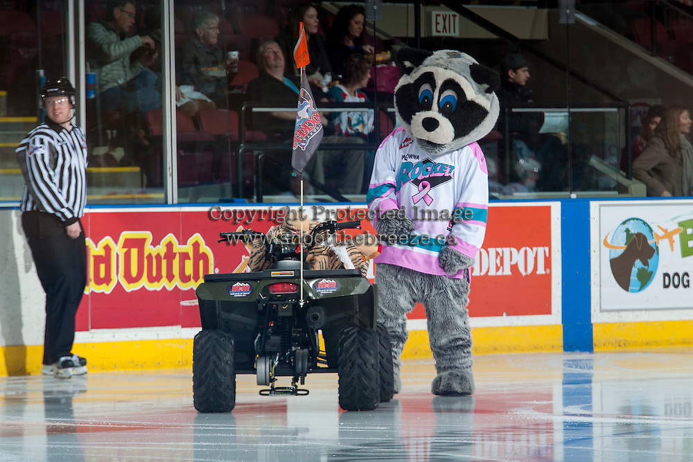 KELOWNA, CANADA - JANUARY 23: Rocky Racoon the mascot of the Kelowna Rockets stands on the ice with a Medicine Hat Tiger doll on the front of his quad on January 23, 2016 at Prospera Place in Kelowna, British Columbia, Canada.  (Photo by Marissa Baecker/Shoot the Breeze)  *** Local Caption *** Rocky Racoon;