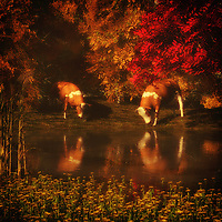 On a beautiful day, we feel the ease of watching two cows drinking water from what is likely a small lake. They are absorbed wholly in their activity. There is something profoundly serene about this visual. We watch the cows relaxing, enjoying the water. We take in the amazing natural scene that surrounds them. There are some truly marvelous details in these visuals. Within the details, we find it easy to lose ourselves in everything this quiet piece has to say. This is a moment in time we can appreciate. Available as canvas wall art or as framed wall art.