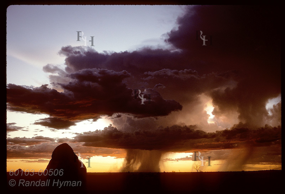 Rain pours from Tanami Desert thunderheads as sun sets on horizon dotted by termite hills. Australia