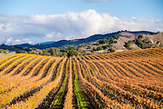 Wine Country in Santa Ynez Valley California
