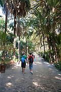 People walking along path through palm trees and botanical gardens,  Malaga, Spain