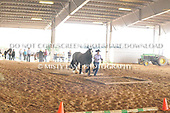 48.  AMATEUR GROUND OBSTACLES IN-HAND