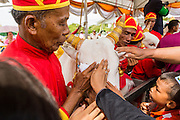 13 MAY 2013 - BANGKOK, THAILAND:  Court attendants hold the Royal Oxen while people stroke them for good luck at the Royal Ploughing ceremony. After the ceremony, thousands of Thais, mostly family formers, rush onto the ploughed ground to gather up the blessed rice seeds sown by the Brahmin priests. The Royal Plowing Ceremony is held Thailand to mark the traditional beginning of the rice-growing season. The date is usually in May, but is determined by court astrologers and varies year to year. During the ceremony, two sacred oxen are hitched to a wooden plough and plough a small field on Sanam Luang (across from the Grand Palace), while rice seed is sown by court Brahmins. After the ploughing, the oxen are offered plates of food, including rice, corn, green beans, sesame, fresh-cut grass, water and rice whisky. Depending on what the oxen eat, court astrologers and Brahmins make a prediction on whether the coming growing season will be bountiful or not. The ceremony is rooted in Brahman belief, and is held to ensure a good harvest. A similar ceremony is held in Cambodia.   PHOTO BY JACK KURTZ