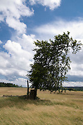 Baum in Landschaft, Oberes Selketal, Harz, Sachsen-Anhalt, Deutschland | tree in landscape, Upper Selke Valley, Harz, Saxony-Anhalt, Germany