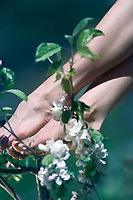 Beautiful artistic closeup of young woman bare feet touching the apple tree blossom flowers