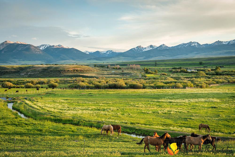 Early morning, Lemhi Range with horses on the Tyler Ranch. Lemhi County, Idaho.