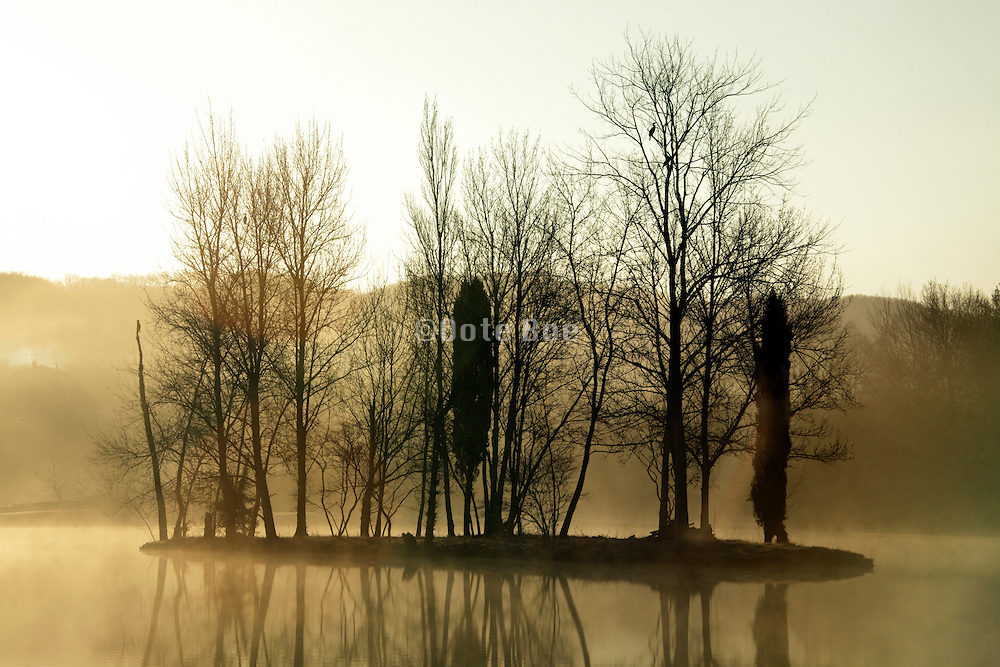 early morning fog with trees by a lake