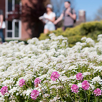 Campus scenes, Spring 2016, Photo Patrick Sweeney