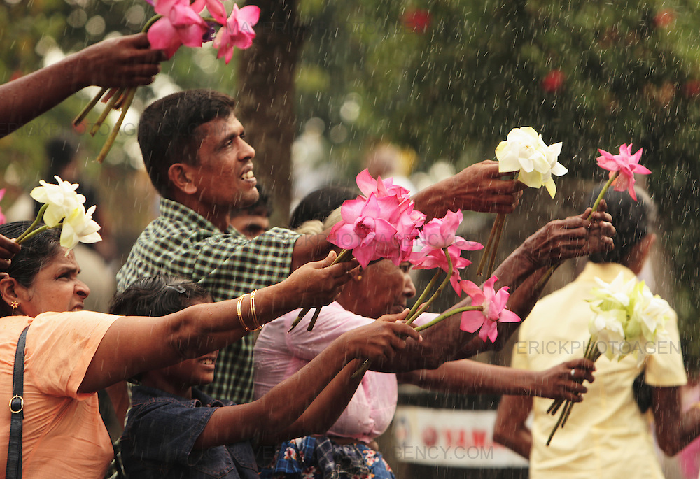 Devotees wash their lotus flowers before offering it at the alter at the temple, Kelaniya Sri Lanka...Vesak is the most significant period in the Buddhist calendar. It celebrates the birth, enlightenment, and death of the Buddha.