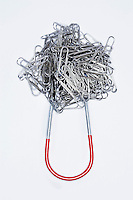 Clump of paperclips attached to horseshoe magnet