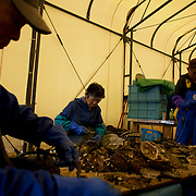 Locals prepare fishing nets in a workshop owned by Togura's fishing community. Togura, a small fishing village in Minami Sanriku, was vastly destroyed by the 2011 tsunami that hit the northeast coast of Japan. Thousands died and hundreds of families lost their houses, business and boats. The recovering community works now in a cooperative system where the few remaining boats spared by the tsunami are shared by all.