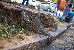 Porto Alegre, RS - 10/03/2020: Ato de início do novo contrato de manejo arbóreo e destocamento do município de Porto Alegre. Foto: Jefferson Bernardes/PMPA