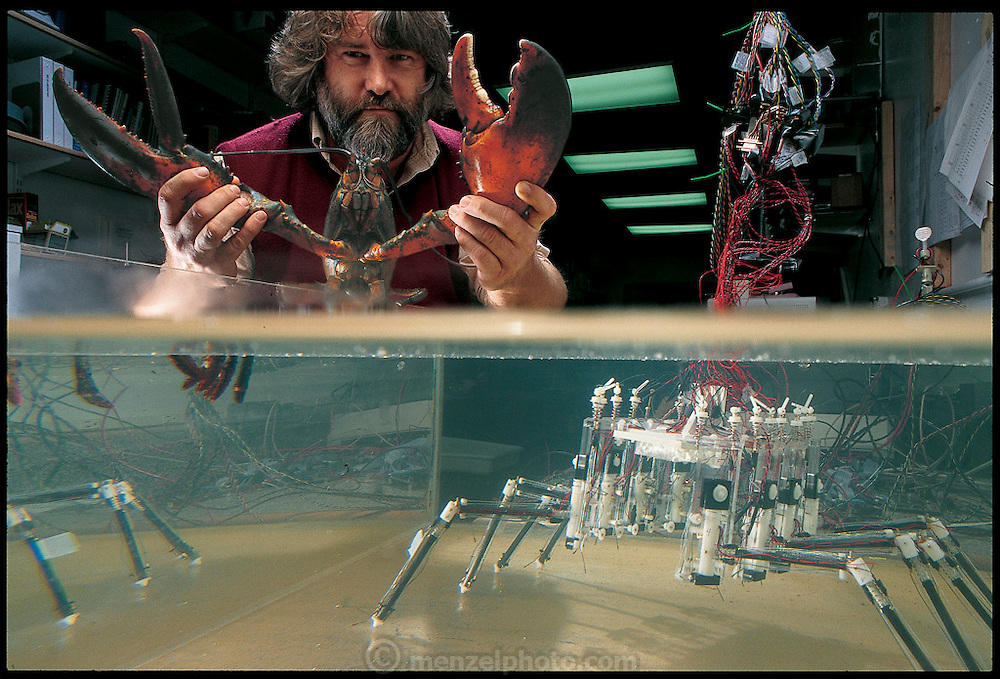Joseph Ayers, head of Northeastern University's Marine Research Laboratory, has been researching lobster locomotion for more than twenty years. Based on Ayers's studies, staff researcher Jan Witting is building a robotic lobster that will capture in detail the behavior of a real lobster. The project has enough potential for sweeping mines that it is funded by the Defense Advanced Research Projects Agency. Nahant, Massachusettes. From the book Robo sapiens: Evolution of a New Species, page 110-111.