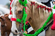 Horse in a Santa hat in the sixth annual Krewe of Jingl New Orleans Christmas Parade. New Orleans has become one of the top tourist holiday destinations in the America.
