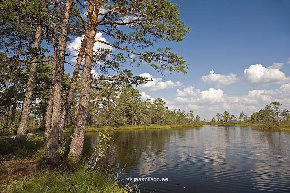 Tolkuse Bog, Pärnu-Ikla Recreation Area, Pärnu County, Estonia, Europe