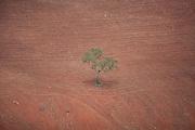 Jeceaba_MG, Brasil...Desmatamento em Jeceaba, Minas Gerais...Deforastation in Jeceaba, Minas Gerais...Foto: JOAO MARCOS ROSA / NITRO