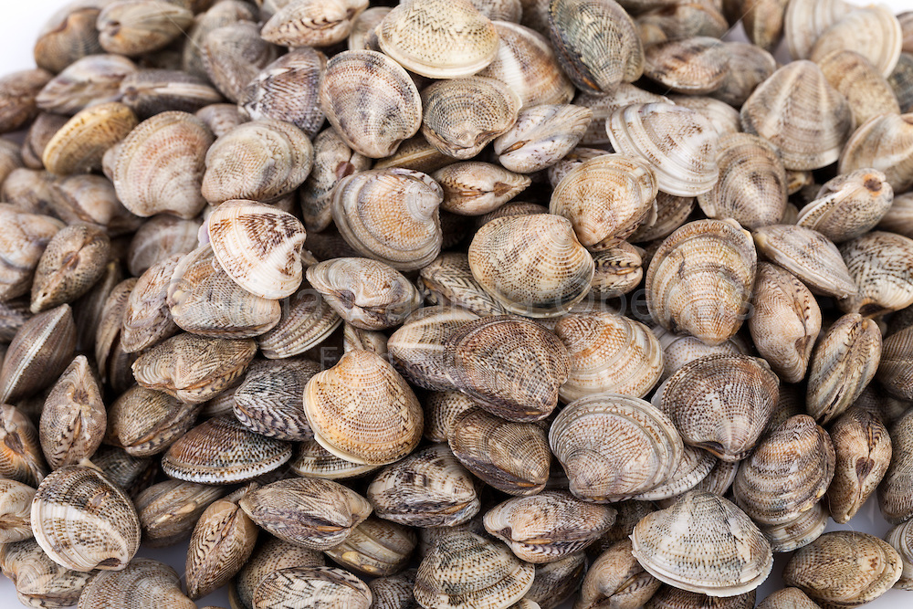 Food backgrounds - Seafood - Raw lupins clams.