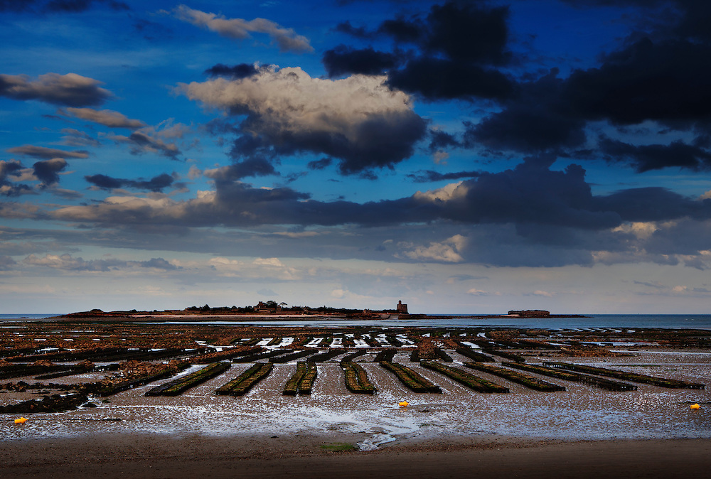 The oyster beds in St. Vaast la Hougue, Normandy, France, which is situated in the cradle of Normandy's oyster industry.<br /> <br /> The oyster growers of Normandy produce about 25% of all the oysters in France, approx. 35,000 metric tons annually. The area of oyster cultivation encompasses more than 2,700 acres.