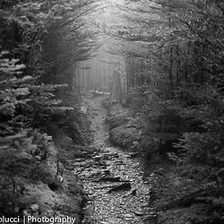 B&W Smokey Mountains