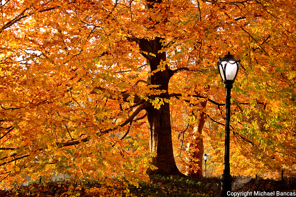 Central Park in the fall New York City