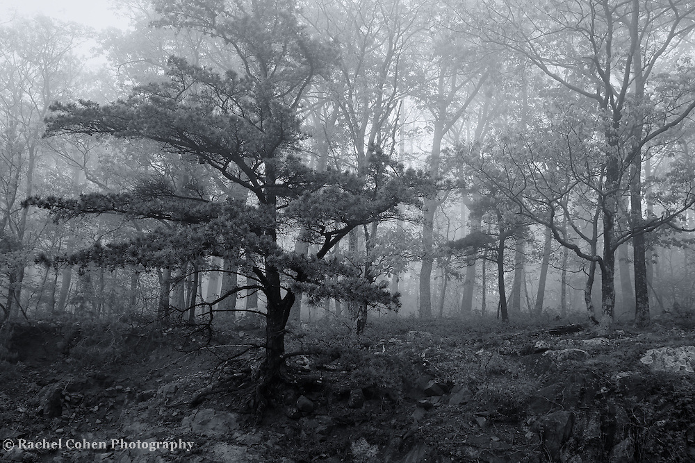 &quot;Foggy Ledge&quot; mono<br />