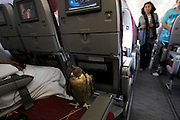 In a Qatar Airways economy cabin of a flight between Baku, Azerbaijan, and Doha, Qatar, a group of Qatari men sit on the plane with their treasured birds. The men practise the art of falconry and to escape the heat of Qatar flew for a week to the cooler weathers of Azerbaijan to let the birds fly. The birds cost over US$10,000 each, have micro-chips in their legs so they can find them if they fly off and documents allowing them to travel abroad.