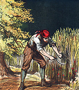 Reaper beginning to cut crop of wheat with a sickle. Chromolithograph from English children's book of 1867.