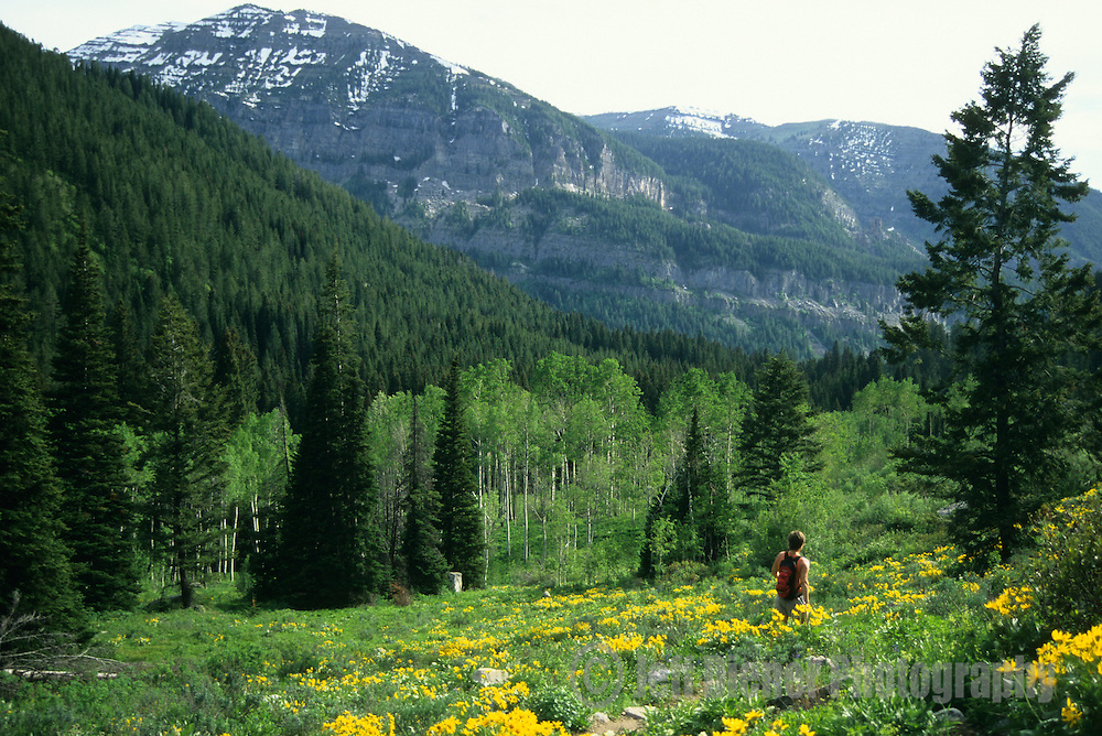 A young woman hikes through wildflowers on the Table Mountain trail, western Tetons, Wyoming.