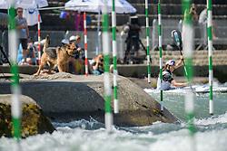 Dog and Viktoria WOLFFHARDT of Austria during the Canoe Single (WK1) Womens Semi Final race of 2019 ICF Canoe Slalom World Cup 4, on June 28, 2019 in Tacen, Ljubljana, Slovenia. Photo by Sasa Pahic Szabo / Sportida