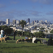 San Francisco, CA; People And Dogs Enjoy Afternoon Sun And City View At Mission Dolores Park