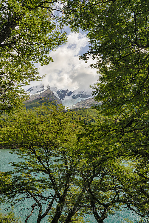 Close to El Chalten, Lake of the Desert belies its name as it is surrounded by the Patagonian Southern Beech forests.