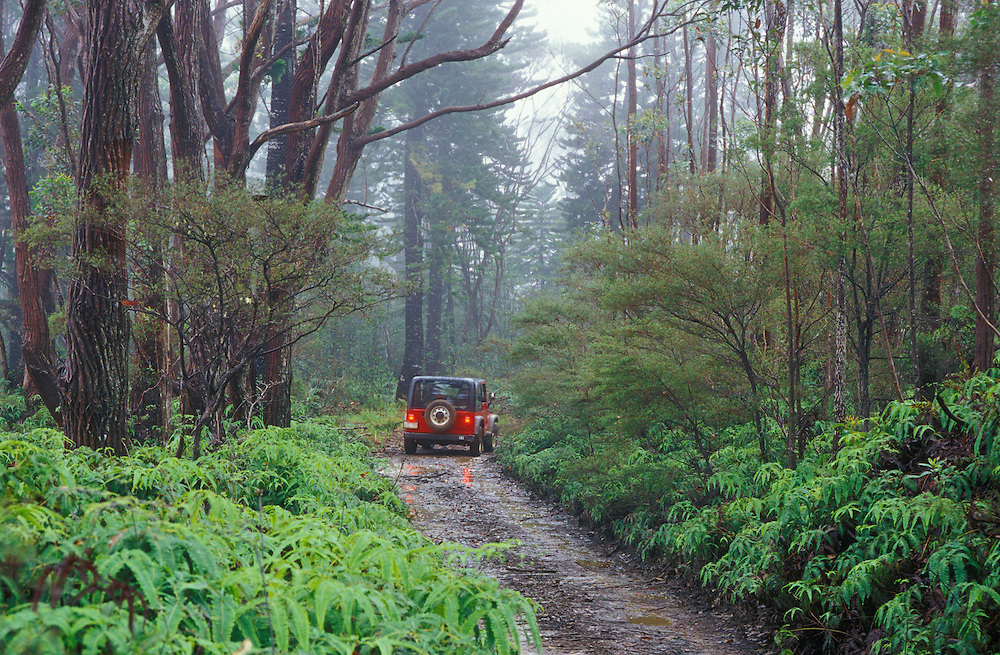 Jeep on muddy Munro Trail through rainforest on road to Mt. Lanaihale; Lanai Island, Hawaii.