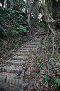 manmade stairs between large tree roots
