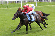 HURSTWOOD (2) ridden by David Allan and trained by Tim Easterby winning The Brittains Beverages British EBF Novice Stakes over 5f at York (£15,000)  during the Midsummer Raceday held at York Racecourse, York, United Kingdom on 14 June 2019.