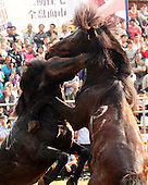 Horse Fighting Competition In Rongshui