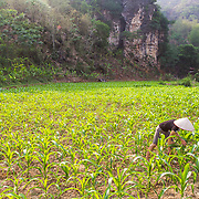 CAPTION: Although Hue's family own land, they lack access to water, had limited knowledge of good farming practices and have struggled to cultivate the ground because it's very dry. Since attending training at the Women's Association, Hue has learned how to prepare the land, when and how to apply organic fertilisers and which varieties are suitable for dry conditions. All of this together has delivered her much higher cassava and maize yields. These yields have in turn contributed to the household's food security, reducing its reliance on food purchased from the market. LOCATION: Coong Village, Huy Tuong, Son La Province, Vietnam. INDIVIDUAL(S) PHOTOGRAPHED: Lo Thi Hue.
